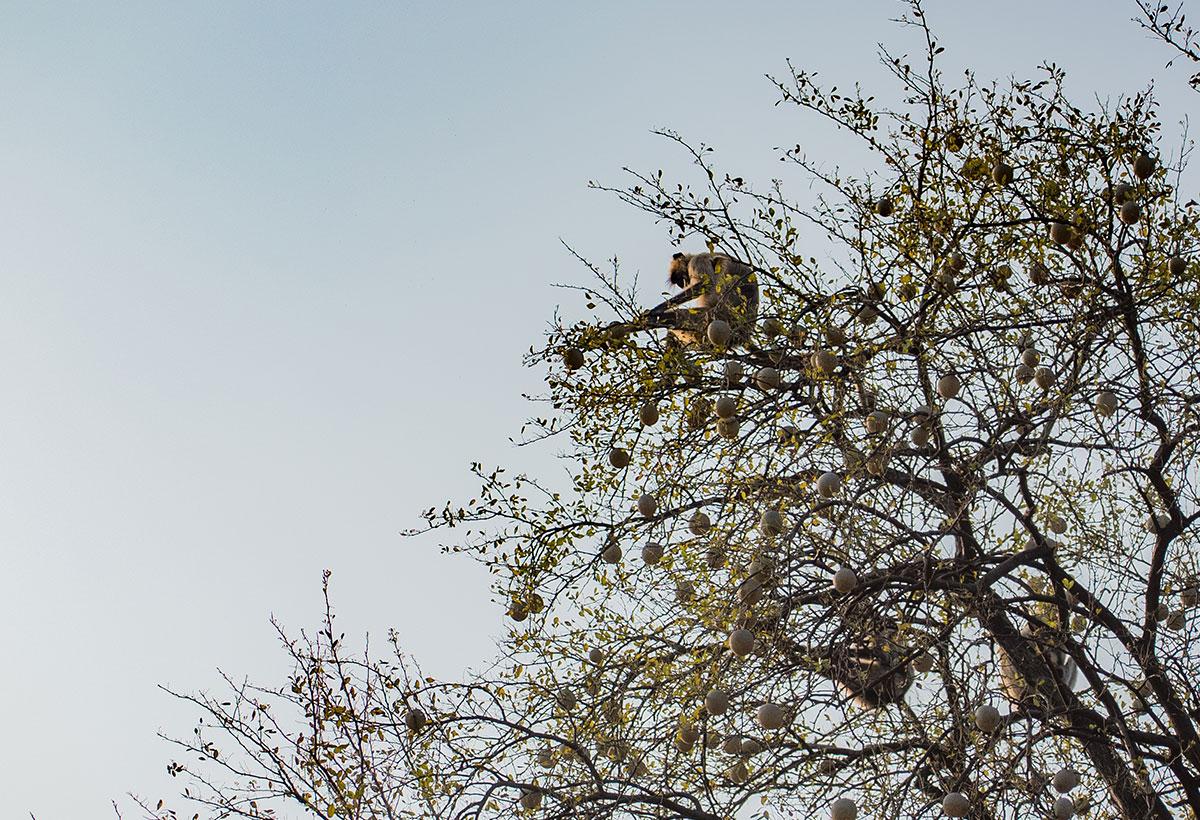 wildlife photography - Anmol Verma