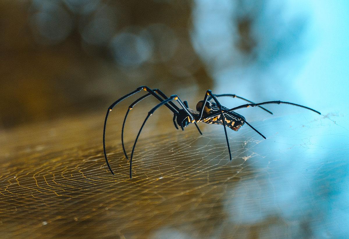 wildlife photography - Arabind Sudhir
