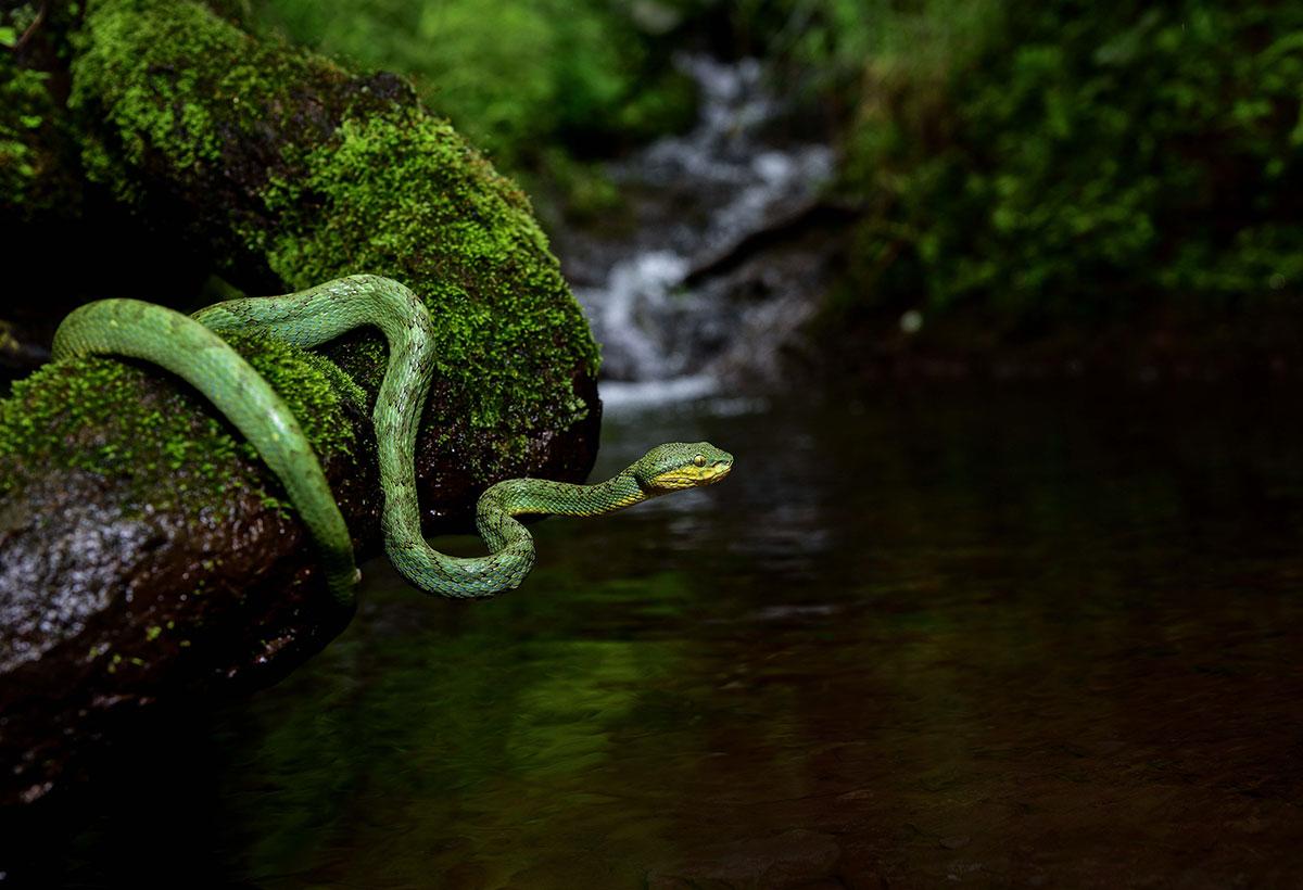 wildlife photography - Azar