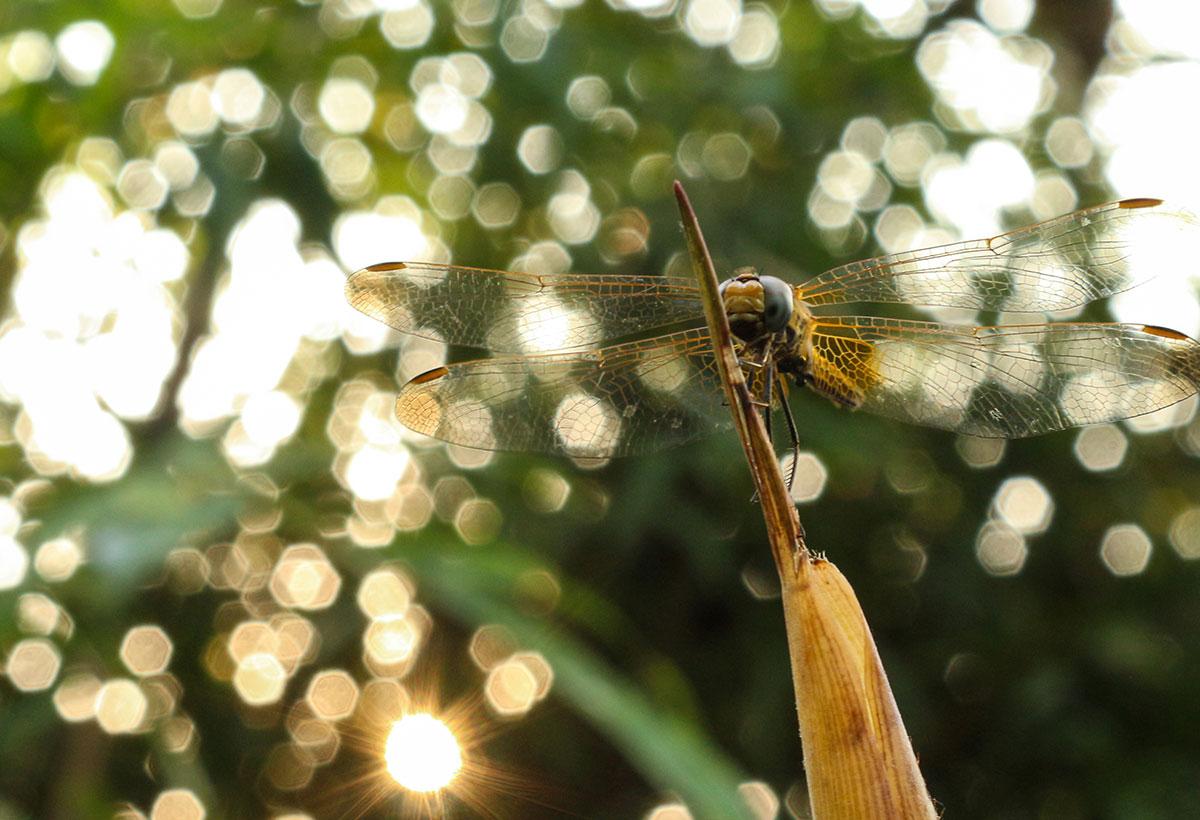 wildlife photography - Divya Durga