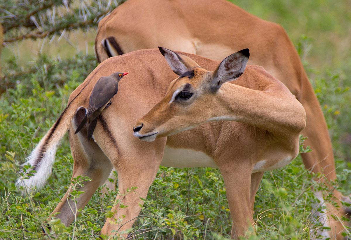 wildlife photography - Harshit Pareek 2