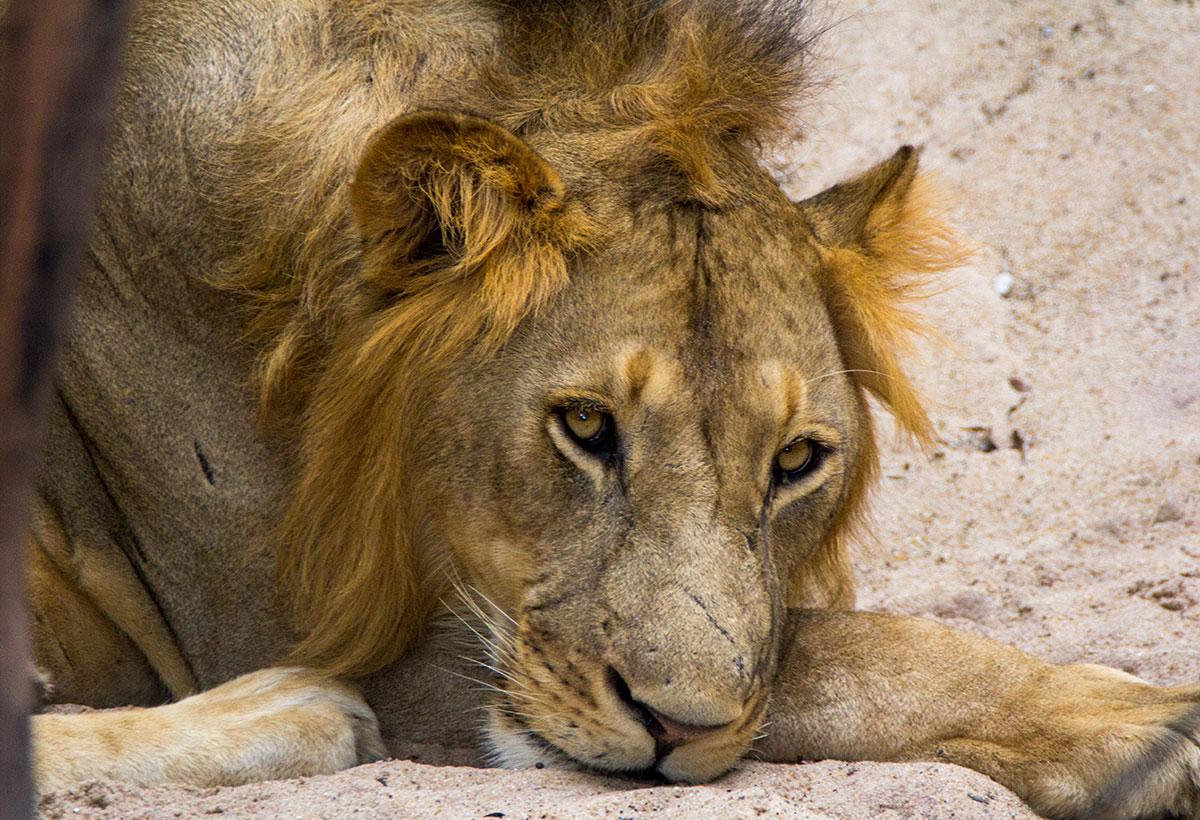 wildlife photography - Harshit Pareek 4
