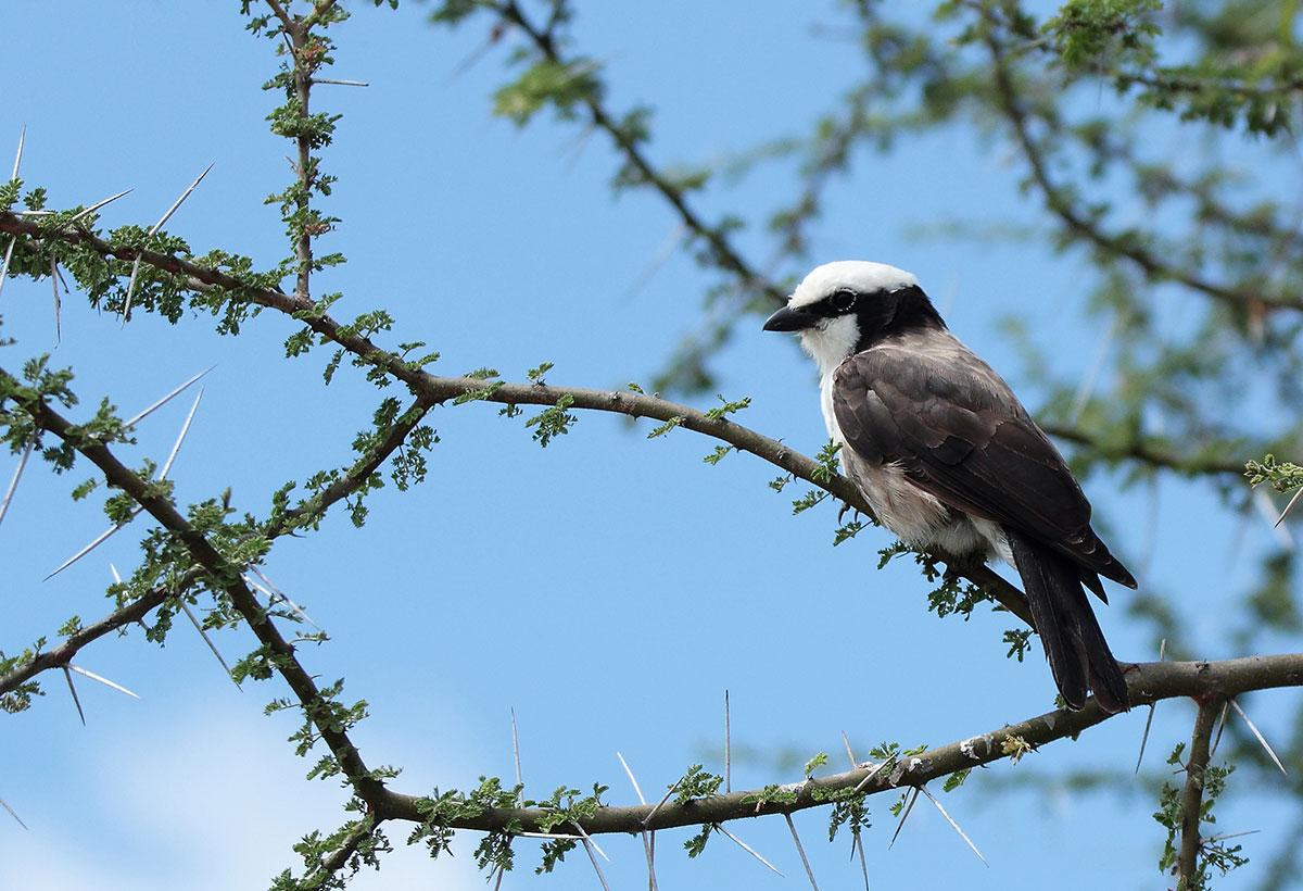 wildlife photography - Harshit Pareek 5