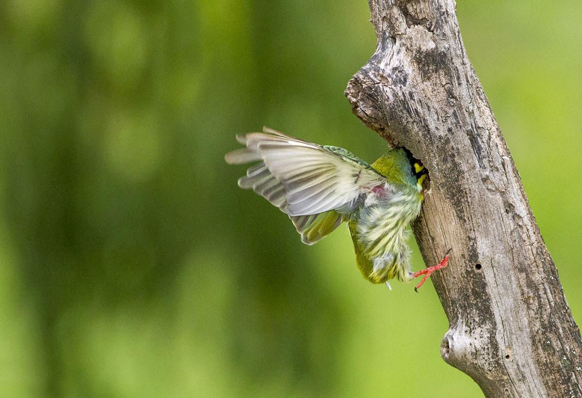 wildlife photography - Kabir Kamat