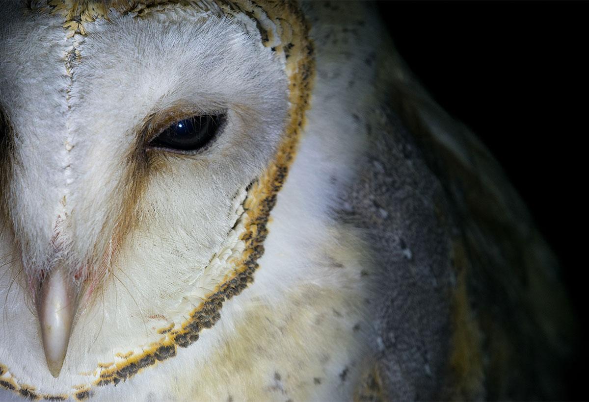 wildlife photography - Keyur Bhatt