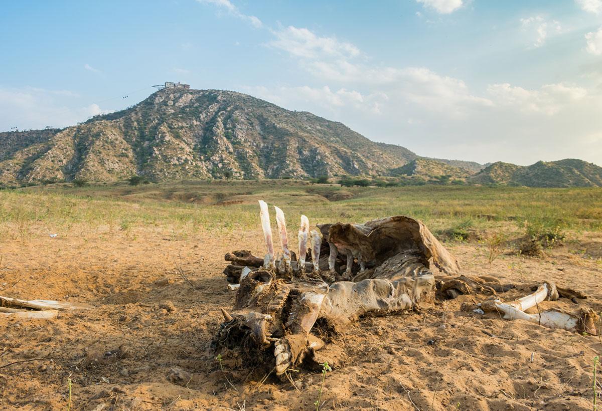 wildlife photography- keyur-bhatt 1