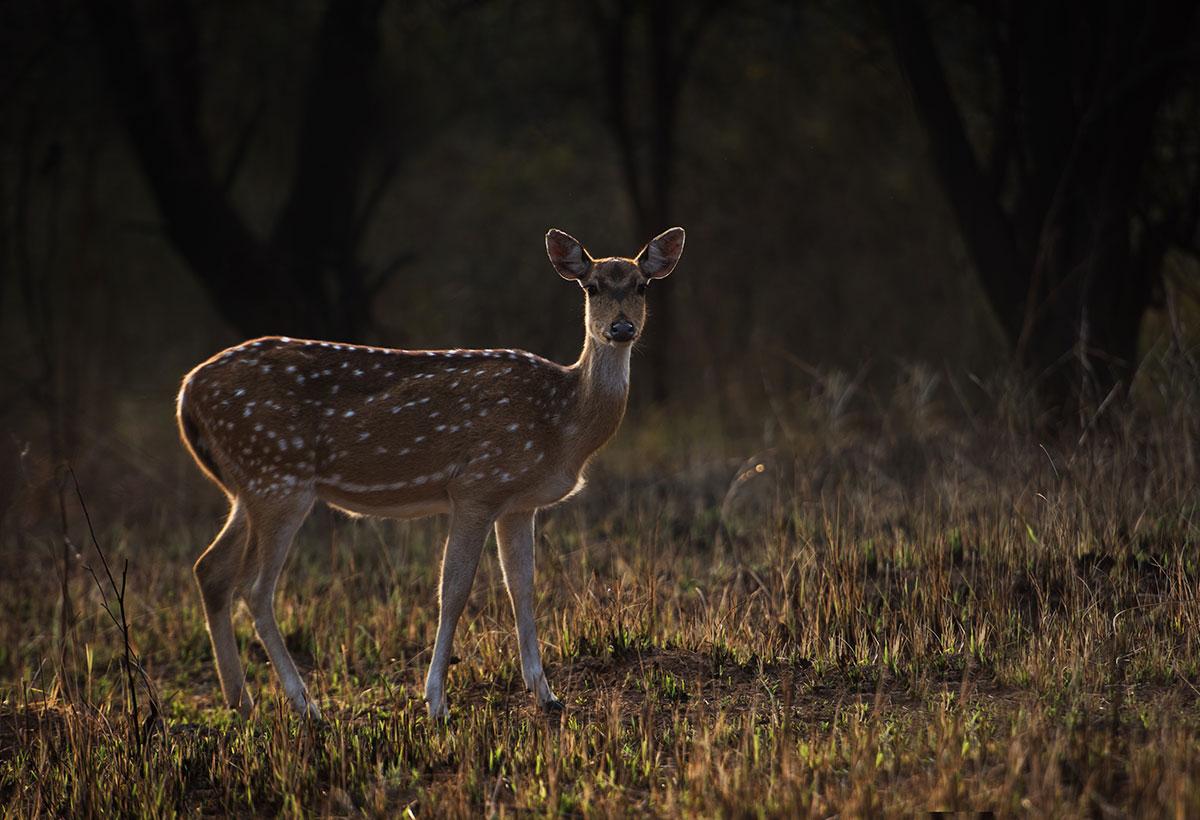 wildlife photography - Prajwal katake 1
